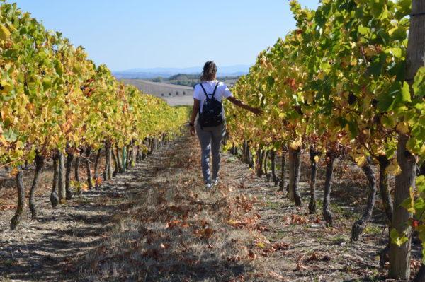 Balade au cœur du vignoble © OT Val de Sioule