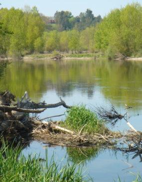 Réserve Naturelle du Val d'Allier © LPO