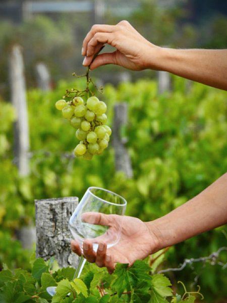 Vignoble de Saint-Pourçain © Photauvergne