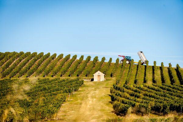 Vignoble de Saint-Pourçain © De Jonghe