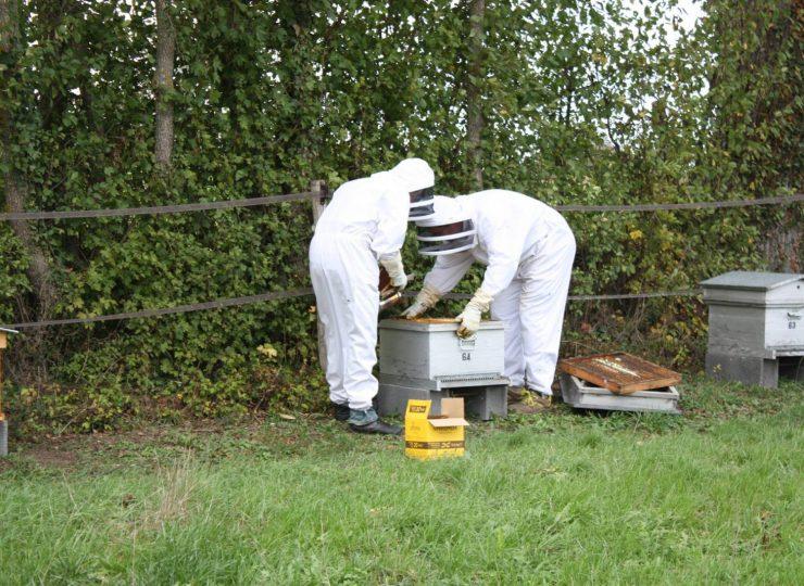 Le rucher de Prionte